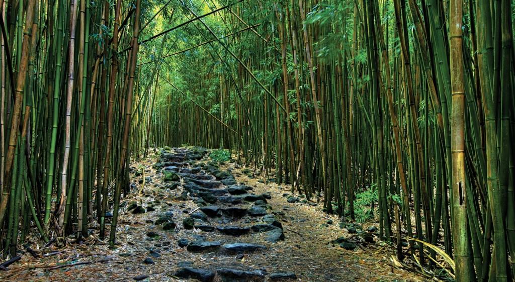 path middle-path1-1024x561