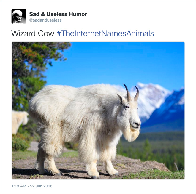 animal-wizard-cow