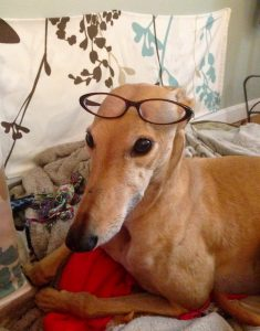 FrugalHound_glasses